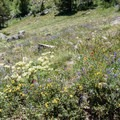 Dazzling array of Indian paintbrush, golden banner, sulphurflowers, and many more.- Devils Thumb + Kings Lake Loop