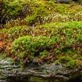 Moss clinging to the rocks.- Elephants Head via Long Trail North