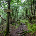 The intersection of the Long Trail and the vista offshoot.- Elephants Head via Long Trail North