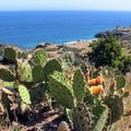 Lots of cactus on the trail.- Trans-Catalina Trail