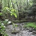 Chenango River tributary.- Leland Reserve