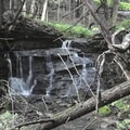 A small waterfall just off of the path.- Leland Reserve