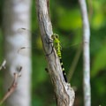 Dragonfly.- Mason Neck State Park