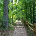 Some of the 6 miles of hiking trails.- Mason Neck State Park