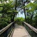 Boardwalk on the Bayview Trail.- Mason Neck State Park