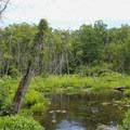 Marshlands.- Mason Neck State Park