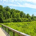 Boardwalk into the wetlands.- Mason Neck State Park