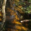 Clear water flows beneath the boardwalk.- Turkey Creek Park