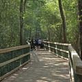 Turkey Creek's beautiful boardwalk.- Turkey Creek Park