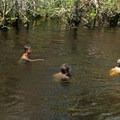 Swimming in Turkey Creek.- Turkey Creek Park