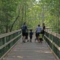 Walking the boardwalk.- Turkey Creek Park