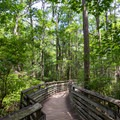 A wooden walkway over Cyprus Swamps, near the trail center.- First Landing State Park