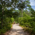 The southern end of the Cape Henry Trail.- First Landing State Park