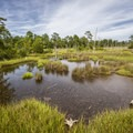 A view of the marsh from an elevated wooden platform along the Cape Henry Trail.- First Landing State Park