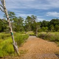 The Cape Henry Trail goes through many different terrains.- First Landing State Park
