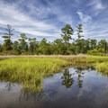 The trees and skies reflecting in the calm water.- First Landing State Park