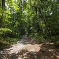 A portion of the Cape Henry Trail.- First Landing State Park