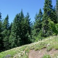 There are a few open meadows filled with wildflowers along the trail.- Lowder Mountain via Upper Trailhead