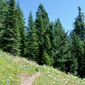 The trail to Lowder Mountain through a meadow of wildflowers.- Lowder Mountain via Upper Trailhead