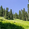 A lush meadow along the trail with some wildflowers.- Lowder Mountain via Upper Trailhead