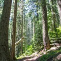 The trail to Lowder Mountain in the Three Sisters Wilderness.- Lowder Mountain via Upper Trailhead