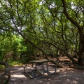 A campsite near the beach with plenty of shade.- First Landing State Park Campground