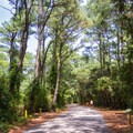Bicycles make the perfect vehicle at this campground.- First Landing State Park Campground