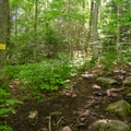 There are many spur trails that lead off the main trail. Signs like the one at left keep hikers on track.- Cobble Hill