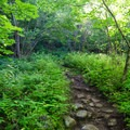 The well-worn trail starts with easy grades.- Cobble Hill