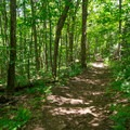 With fewer obstacles and a couple of switchbacks, the longer, easy trail allows hikers to take in the scenery.- Cobble Hill