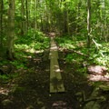There are a few spots on the easy trail that are prone to mud. Planks and boardwalks help traverse those spots.- Cobble Hill