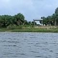 View of the shoreline.- St. Marks National Wildlife Refuge