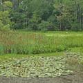 Looking for birds.- St. Marks National Wildlife Refuge
