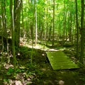 The trail crosses a couple of small streams along the way.- Cobble Lookout