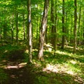 Following the blue-blazed trail as it meanders through the forest.- Cobble Lookout