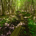 Planks to help hikers traverse muddy areas.- Cobble Lookout