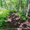 A hiking trail in Cave Point County Park.- Cave Point County Park