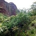 The Koaie Canyon Trail.- Lonomea via the Kukui Trail
