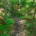 Nicely graded trail.- Mount Tecumseh