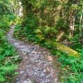 Mount Tecumseh Trail is very green in the summer.- Mount Tecumseh