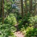 The trail narrows a bit on the ridge.- Mount Tecumseh