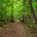 The trail follows a former carriage road, making a wide and level path.- Shelving Rock Mountain