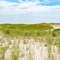 Sand dunes covered in beach grass.- Race Point Beach