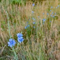 Wildflowers along the trail.- Eldorado Mountain