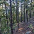 The terrain becomes more mellow as you near the Rattlesnake Gulch Trail.- Eldorado Mountain