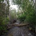 A creek follows a large portion of the trail.- Pole Canyon Trail