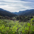 Groves of Manzanitas line the Middle Fork Trail.- Middle Fork Trail to Redwood Meadow