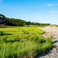 Verdant grasses line the extensive pebble beach at Cape Hedge Beach.- Cape Hedge Beach