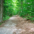 Trail to the campsites.- AMC's Cardigan Campsites