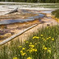 Wildflowers and brightly colored pools.- Upper Geyser Basin Trail